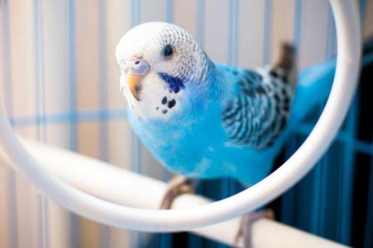 Kuşu Edinme